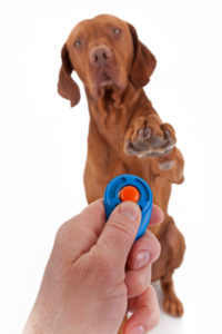 event marker dog training