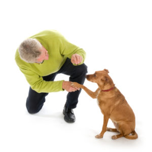 fading rewards in dog training