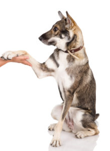 Methods and techniques in dog training
