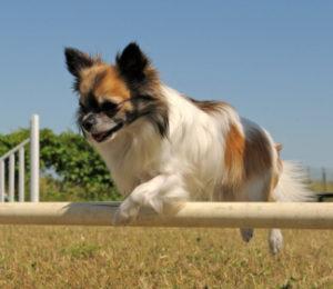 Stage Three in dog training