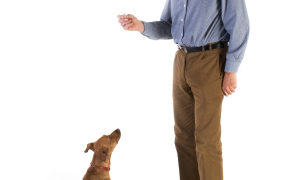 What is a cue in dog training