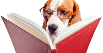 Fact versus theory in dog training
