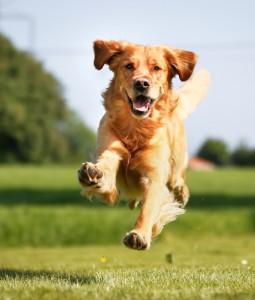 Opportunistic Dog Training