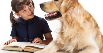 The language of dog training: is it getting too complicated?