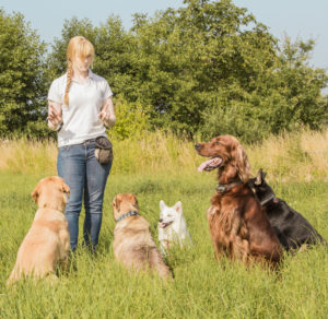 5 skills to get you going with positive dog training