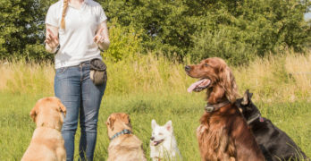 5 skills to help you get started with positive reinforcement dog training