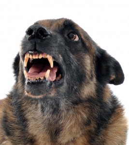 Dog behaviour - growling and guarding