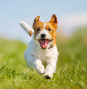 How does positive dog training work