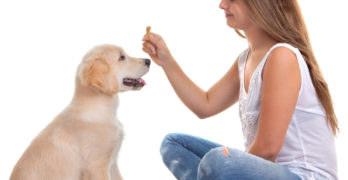 Is your dog a Yo-Yo? Find out here and learn how to avoid bad behaviour chains