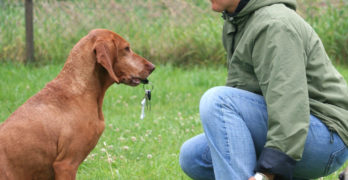 The secret of successful dog training