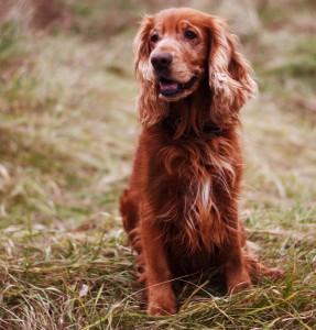 stage-five-dog-training