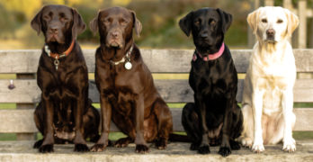Dog training tips: How to teach the stay