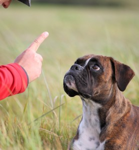 using no reward markers in dog training
