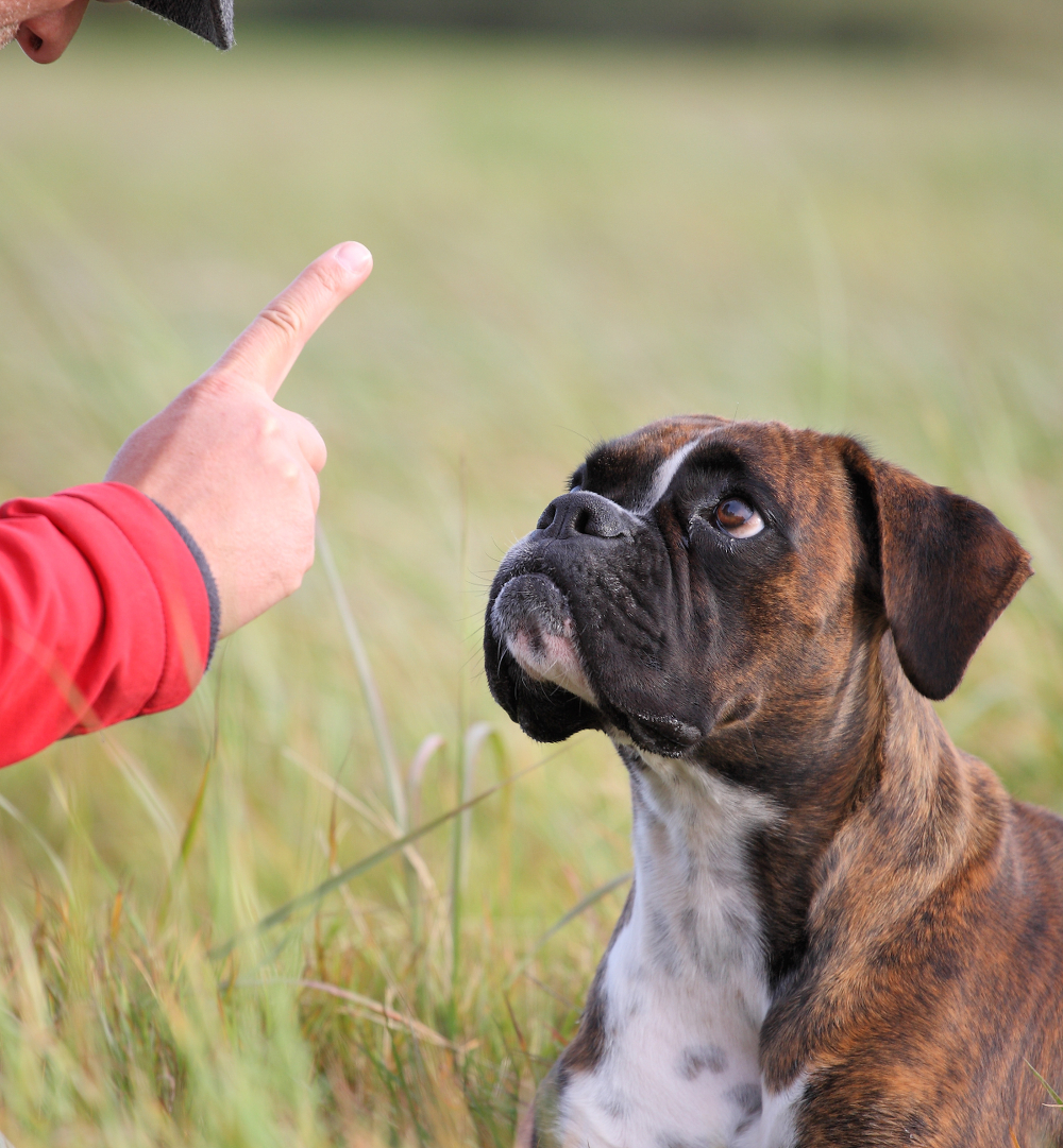 Using Play As A Reward Dog Training