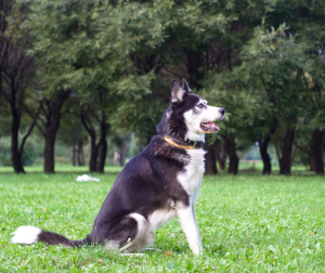 dog training language - what is latency