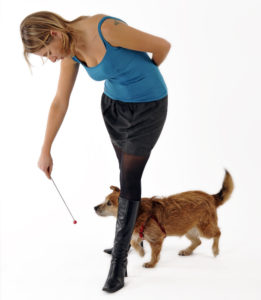 Teach your dog target training