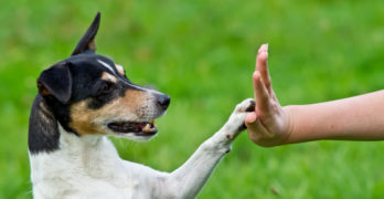 Clicker training: what its all about and how it can help your dog