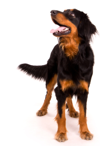 10 reasons your dog didn't get trained