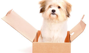 Dog games: Four paws in a box