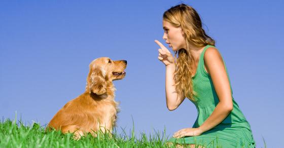 Post image for 3 principles to help you train a naughty dog