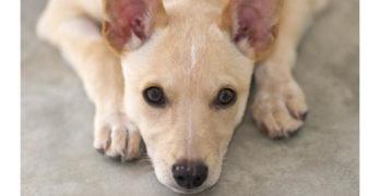 Dog training secrets: the perfect treat pot