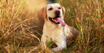 Training a Pet Gundog – Tips and Advice to get you Started