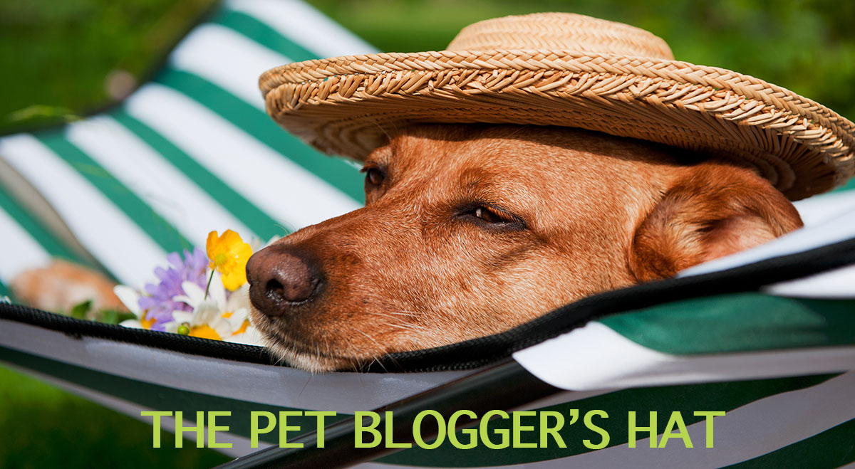 pet-bloggers-hat-1