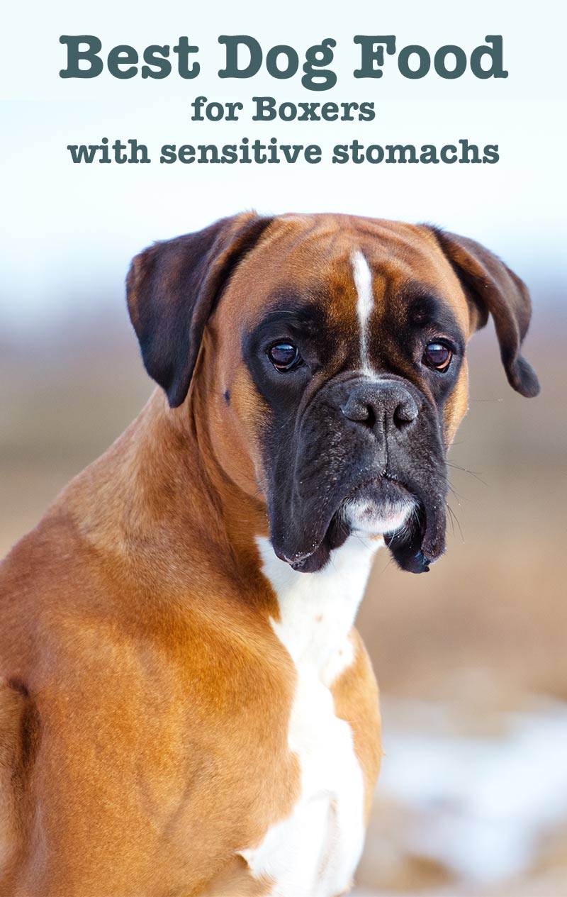 What Is The Best Dog Food For Boxers With Allergies