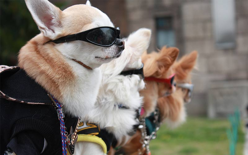 cool small dog names