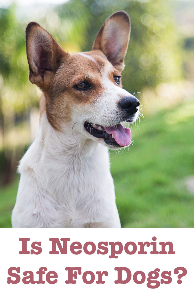 Can Neosporin Ointment Be Used On Dogs