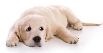 Atarax For Dogs