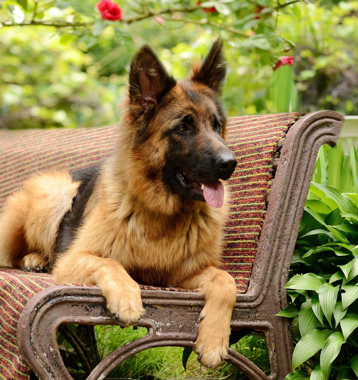 best shampoo for german shepherd dogs