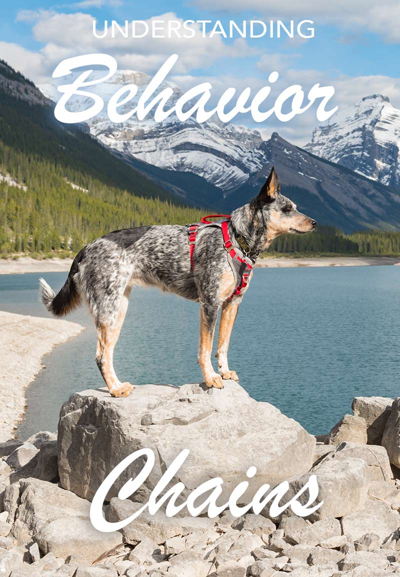 How to use behavior chains in dog training