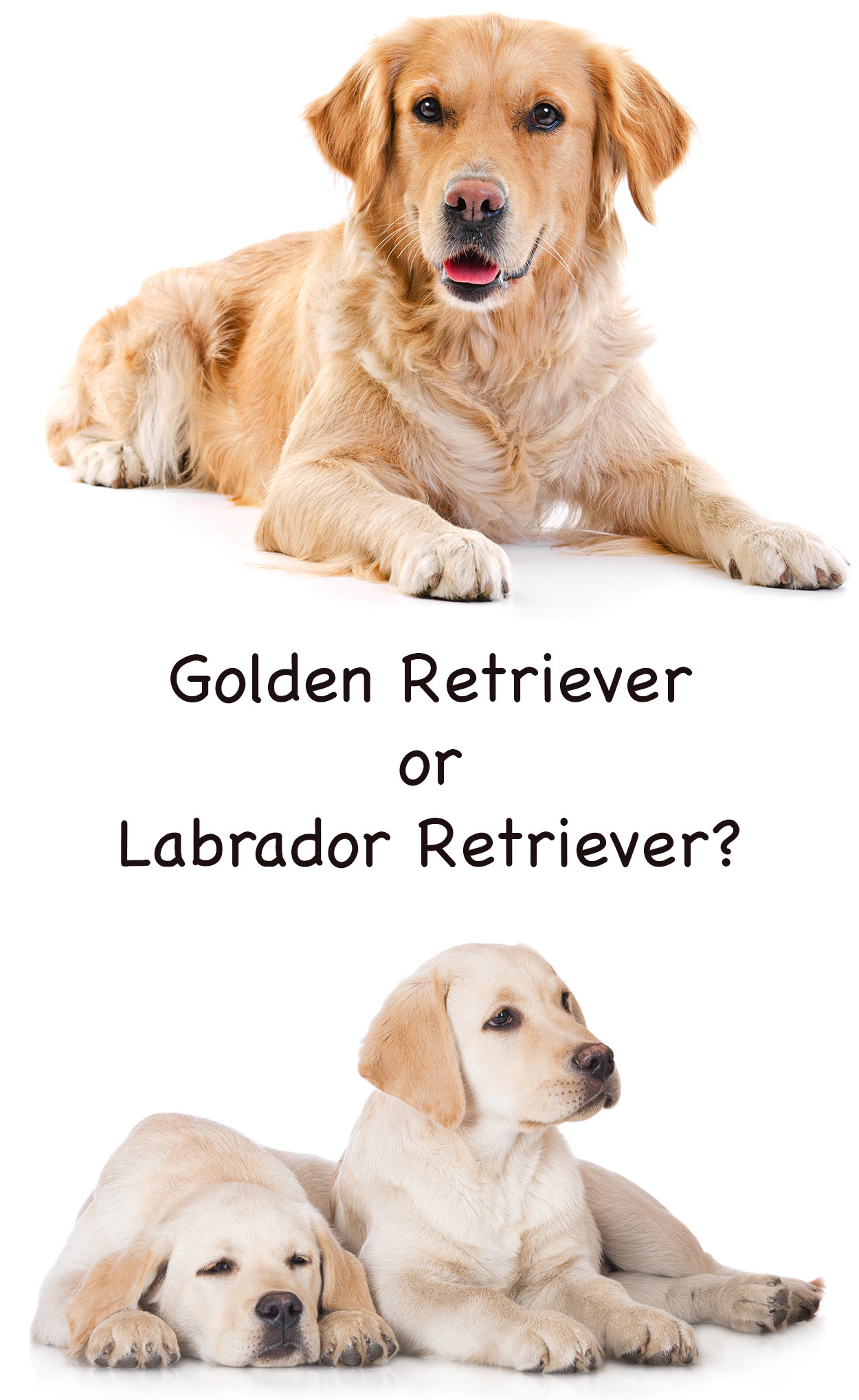 What Is The Best Dog Food For Golden Retrievers