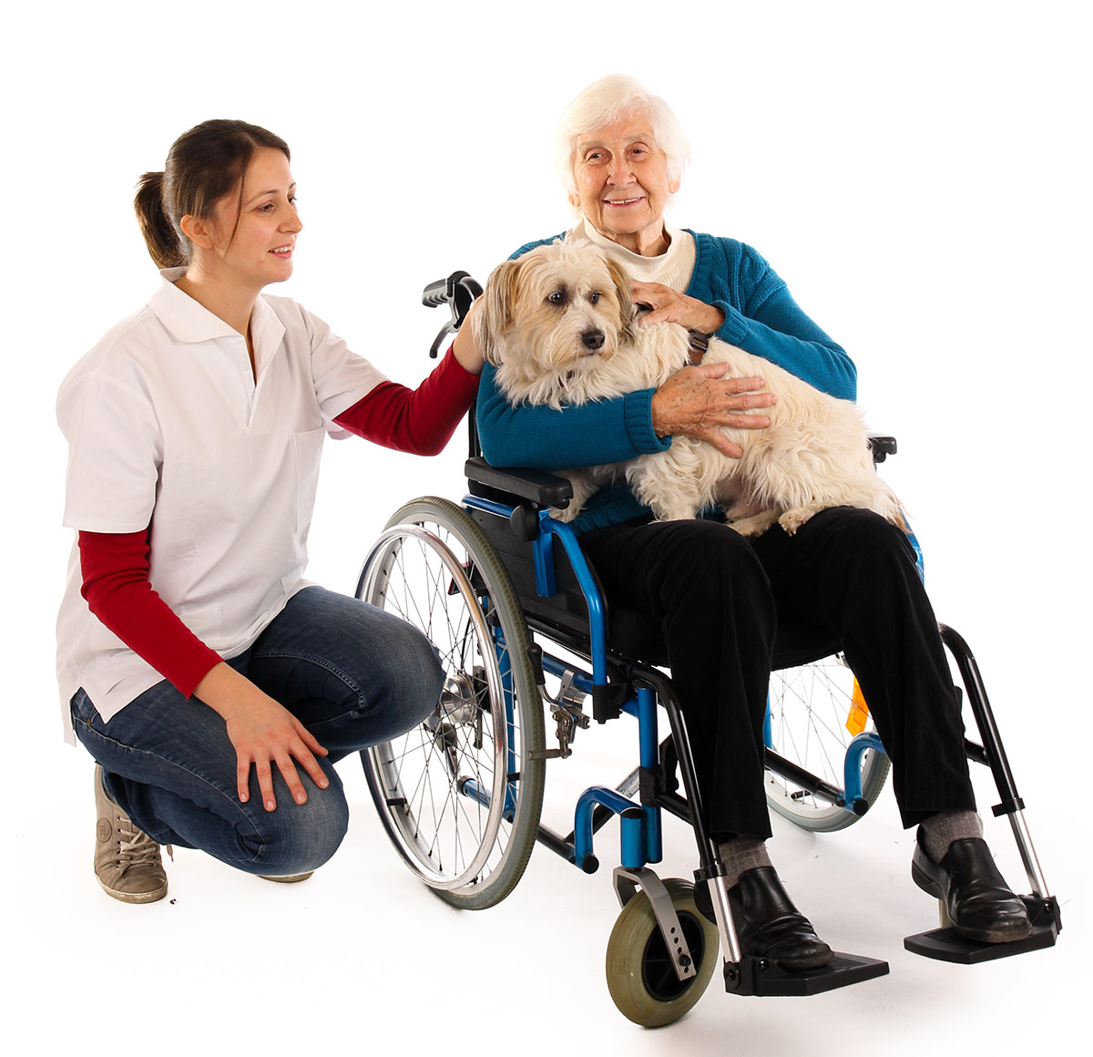 therapy dogs USA