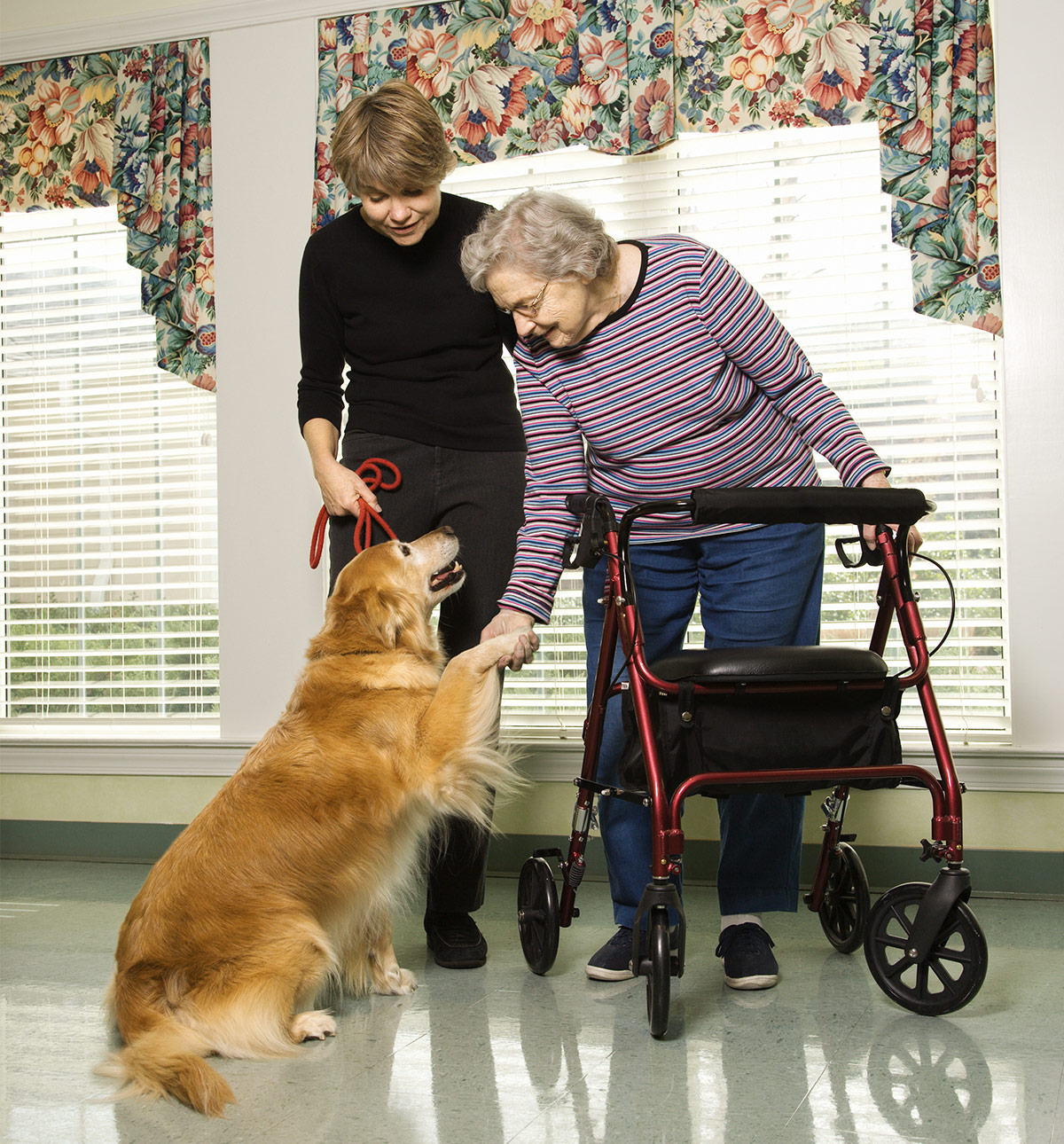 Therapy Dogs in Nursing Homes