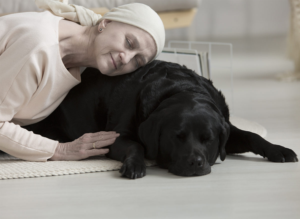 therapy dogs AKC