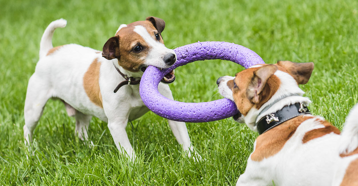 Best Small Dog Toys : Best tug toys for dogs small to large and even