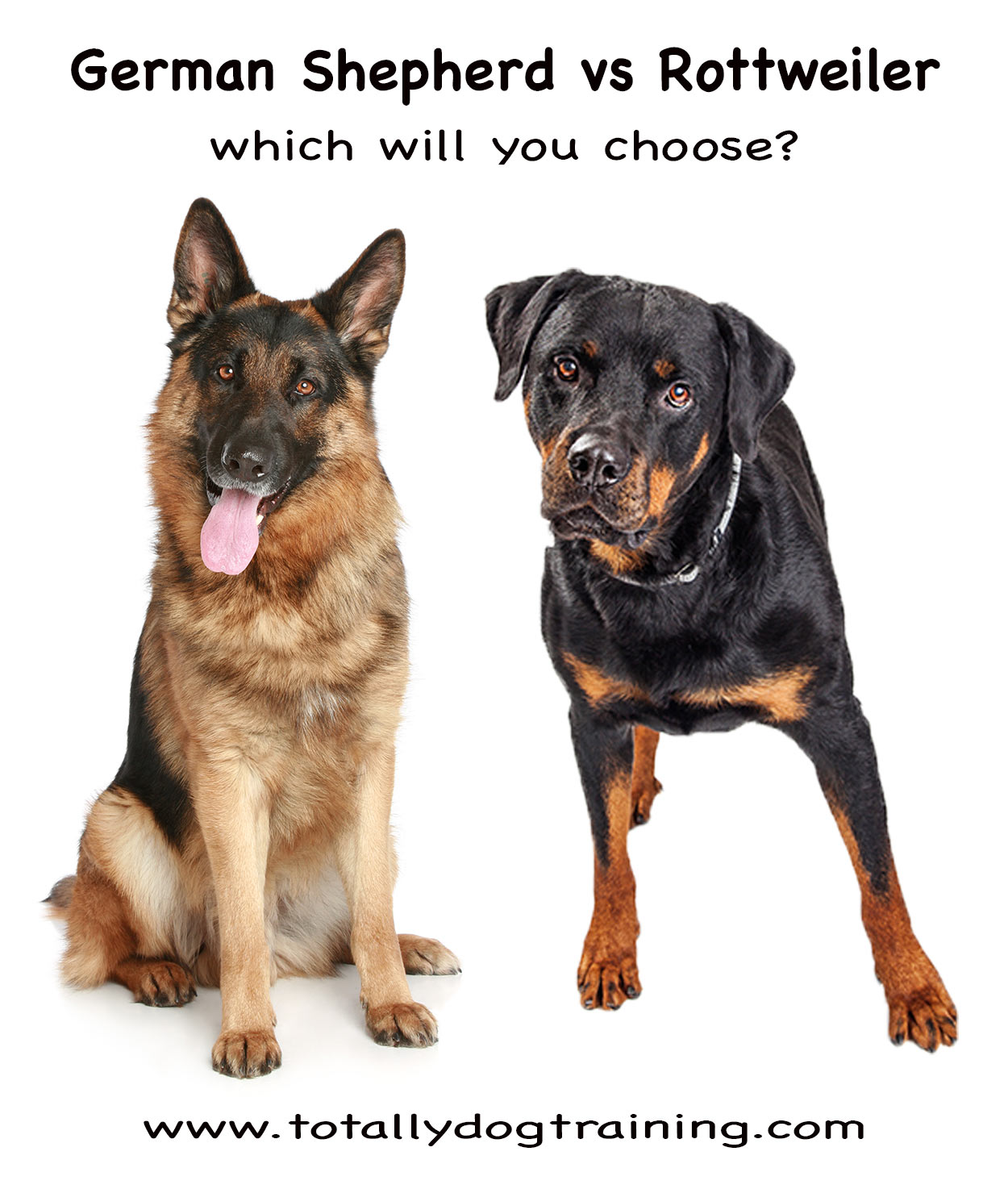 Rottweiler Vs German Shepherd - Which Pet Is Right For Me?
