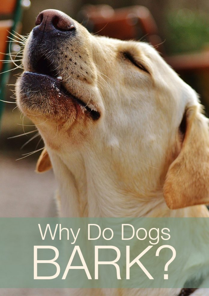 What Do Dog Barks Mean - Fascinating Facts About Dog Language