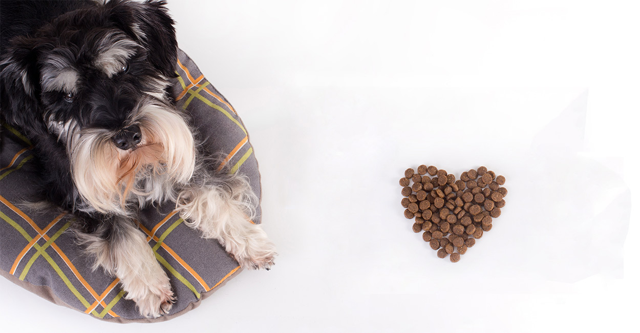 best food for a miniature schnauzer