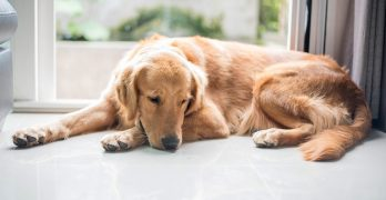 Hydroxyzine for Dogs – Where To Get It And How It Works