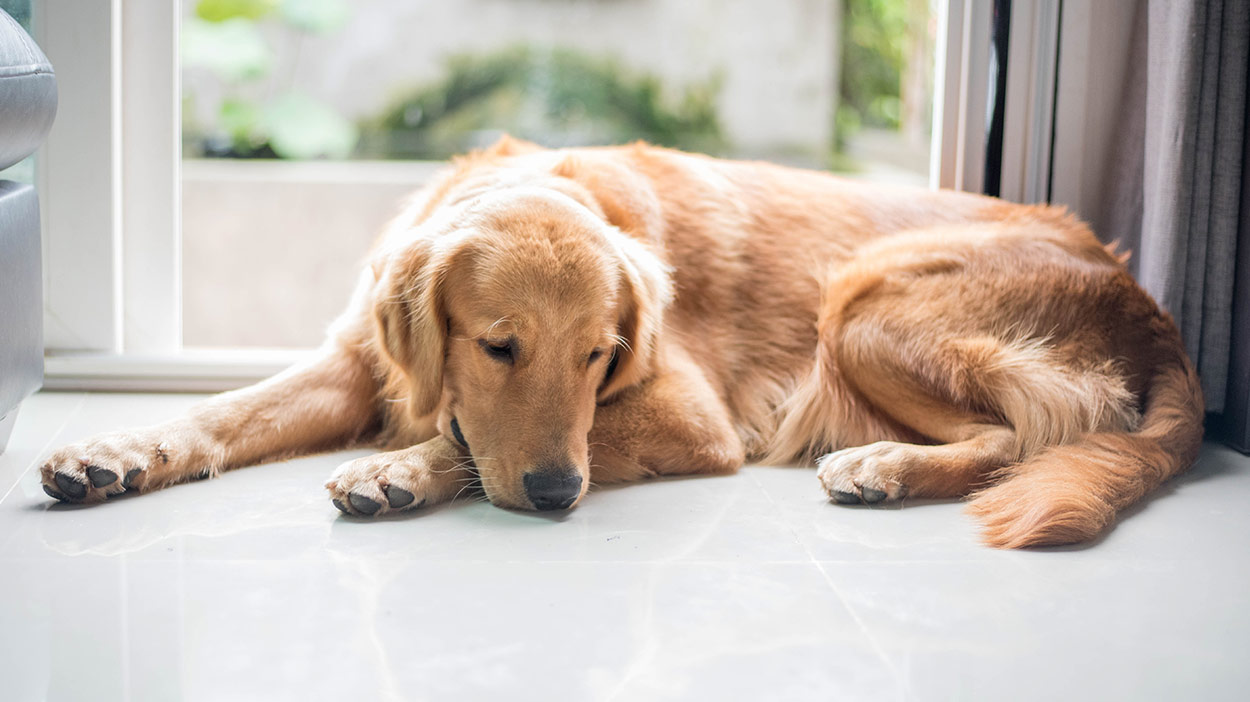 Hydroxyzine for dogs