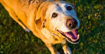 What Do Dog Barks Mean: Fascinating Facts About Canine Conversation