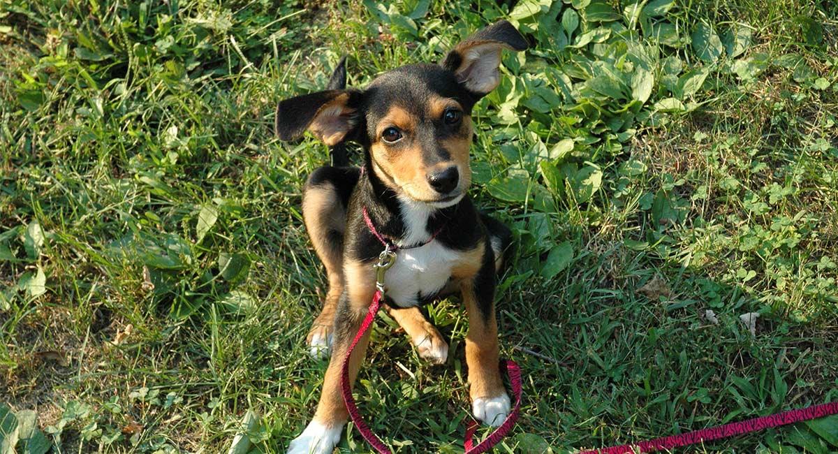meagle